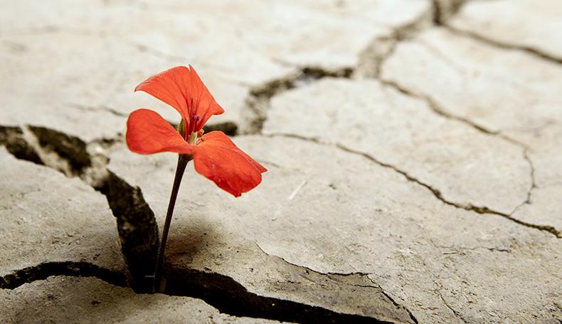 Allenarsi alla resilienza